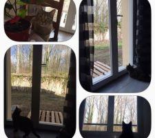 notre petite ivy a hate d etre au printemps pour pouvoir enfin sortir dehors