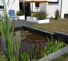 Au bassin aussi ça pousse, les plantes aquatiques prennent leur place et commencent à apporter un côté naturel à l'ambiance géométrique des poutres en chêne.