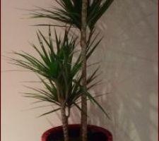 Notre beau pot et notre belle plante :)