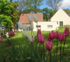 Demain il pleut, les tulipes seront moins belles ! A gauche, salon/salle à manger, au milieu cuisine/cellier, à droite les chambres