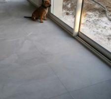 Future chienne de garde en place