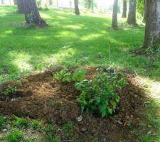 Les 2 massifs de chaque côté du portail : hortensia vanille/fraise et à feuilles de chêne ( aiment le soleil )