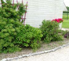 Massif de devant : hortensias, seringat, eucheres et rhododendron en fleur