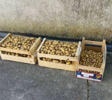 recolte 2015 de patates