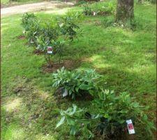 plantation des 6 rhododendrons ramenes de bretagne