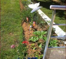 la plate bande composee de plantes pour jardins secs commence a prendre des couleurs avec le retour du soleil