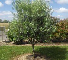 notre tout petit olivier a bien grandi