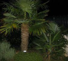 mis n place éclairage a led très puissant sous les palmiers