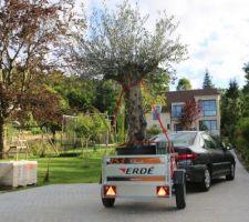 Transport olivier centenaire