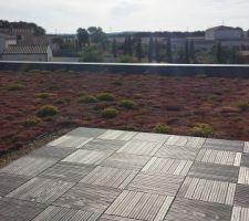 toiture vegetalisee en juillet