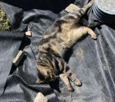 le chat nous donne un coup de main