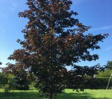 l arbre qui est pile devant notre future maison
