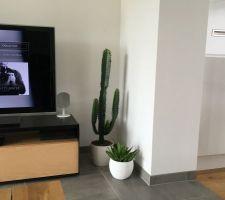 nouveau cactus