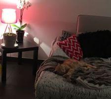 coussins 4 murs ambiance cocooning reussie il y en a qui apprecient dur la vie de chat dans cette maison