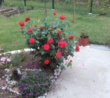 mon jardin