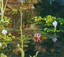L'ambiance d'un bassin naturel. Vous entendez les grenouilles ?