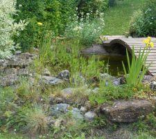 Prolongation du bassin par une zone naturelle peu profonde (le coin des grenouilles)