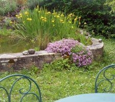Iris palustres et saponaire