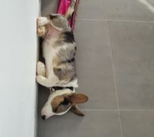 Pendant qu'on est dans les travaux, mambo trouve des lieux insolites pour dormir