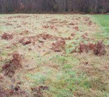 Voilà notre terrain. Il faut le nettoyer maintenant pour faire l'implantation...