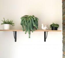 etagere du salon avec plante tombante
