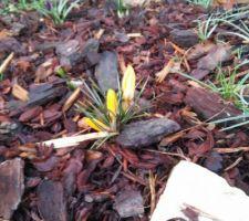 premieres fleurs du printemps