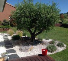 Photos et id es d co g n rale du jardin 9 217 photos - Deco jardin avec olivier rouen ...