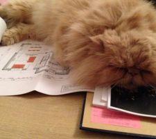 Le futur maître des lieux en pleine réflexion sur les plans! C'est épuisant!