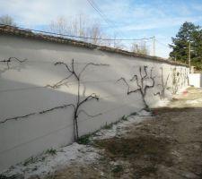 le paysagiste est passe fixer les rosiers et la vigne sur le mur nouvellement enduit