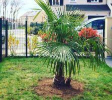 copain palmier
