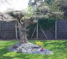 olivier en plateau fin agencement avec schiste et plantation