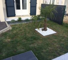galets blancs palmier