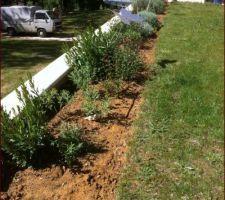 Massif de plantes pour terrain sec