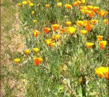 la prairie fleurie refleurie