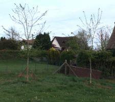 les 2 arbres replantes avec un espace suffisant afin de pouvoir installer un hamac plus tard