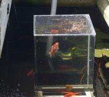 Comment mettre vos poissons en avant quand vous avez une bassin profond