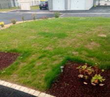 pousse de la pelouse