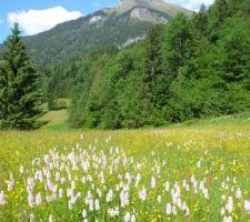 Ça y est, le terrain est à moi, et toutes ces fleurs aussi :-)