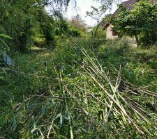 donne bambous a qui veut bien se déplacer sur Bourges nord. Servez vous