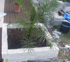 Le palmier mis en place