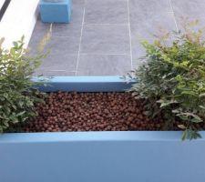 Remplacement des mes Fuchsias par des Bambous Sacrés ;-)