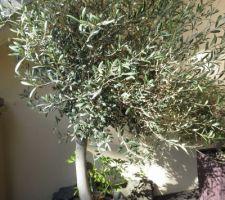 Mon chouchou: mon olivier!!!