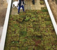Pose de la terrasse végétale
