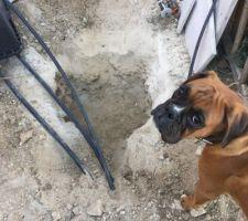 Ma fosse pour le regard   Le chien est en inspecteur des travaux fini