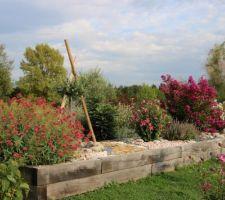 Début d'automne, des plantes choisies pour être en harmonie. (Valérianes, olivier, hibiscus, sauge, lagerstroemias, tamaris.)