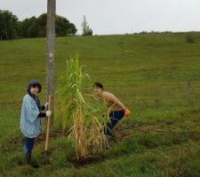 Première plantation pour cacher ce magnifique poteau.