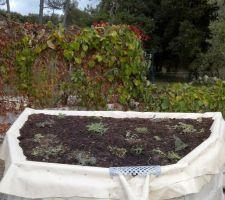 Toit végétal au dessus du puits servant à l'arrosage du jardin