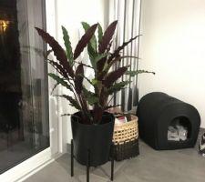Nouvelle plante et nouveau cache-pot sur pied ds le salon