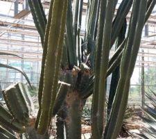 En recherche de cactus qui tiennent le choc en extérieur pour notre patio