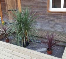 Achat de plantes pour le massif de la piscine.